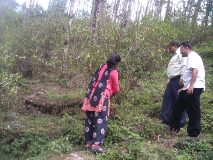 This is in another community forestry group site, where a group member (woman in pink) is explaining to the audit team how they collect/harvest lokta/Argeli on a sustainable basis.