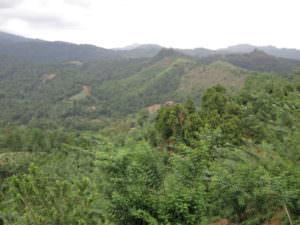 Management Spotlight Interview: Jeff Hayward – Vice President, Global Climate Lead, Rainforest Alliance