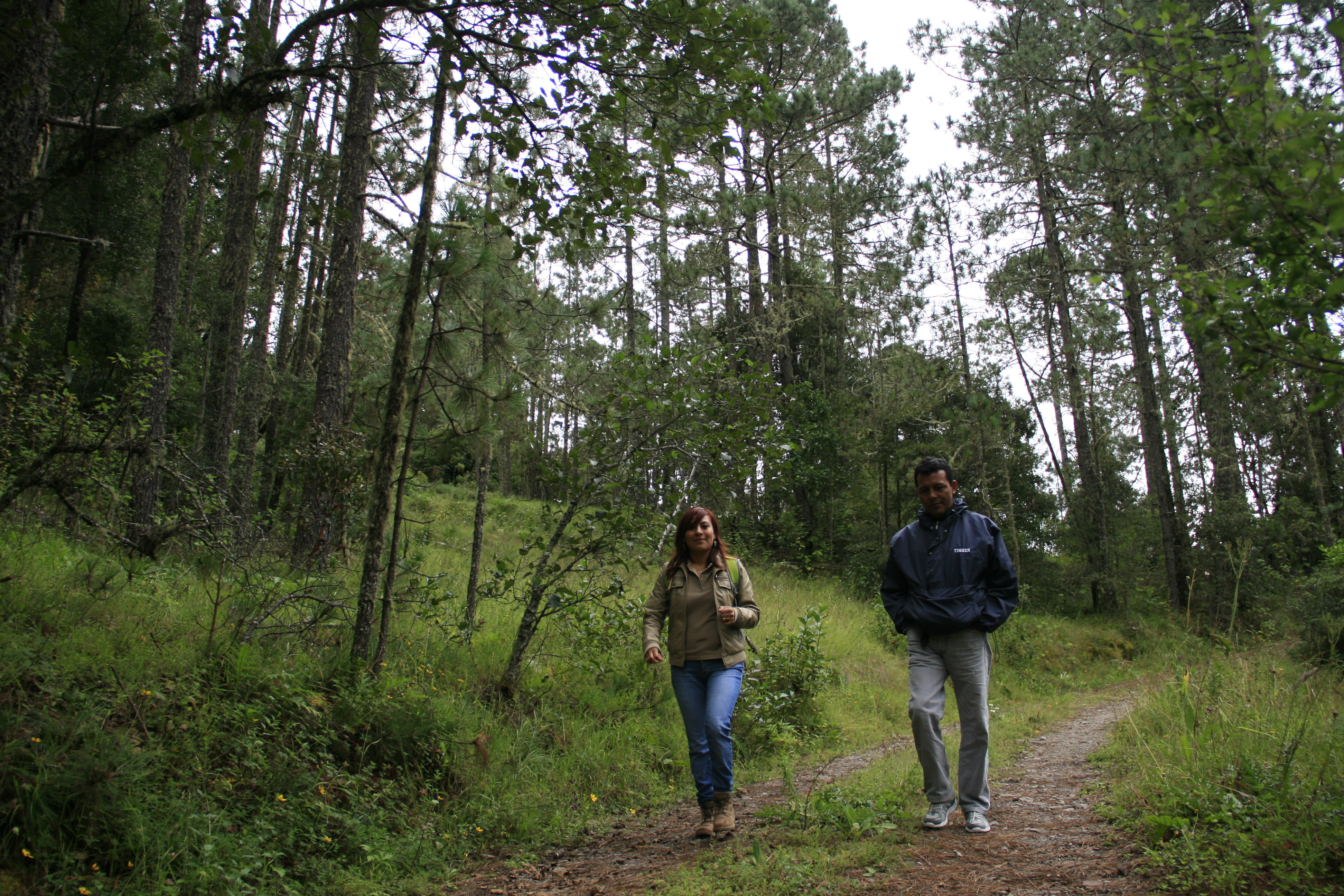 angelica-walking-trail.JPG
