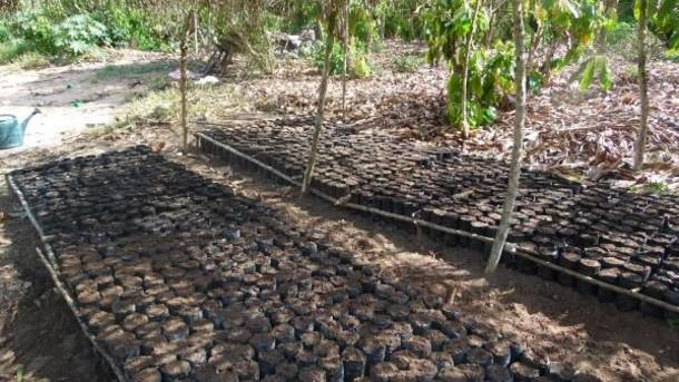 Sustainable-cocoa-sector-needs-long-term-credit-access-for-farmers_strict_xxl.jpg
