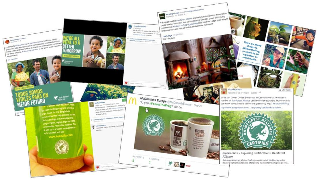 Examples of how companies have leveraged social media during Follow the Frog in the past.
