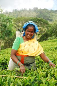 Tea plucker in India - photo by Charlie Watson