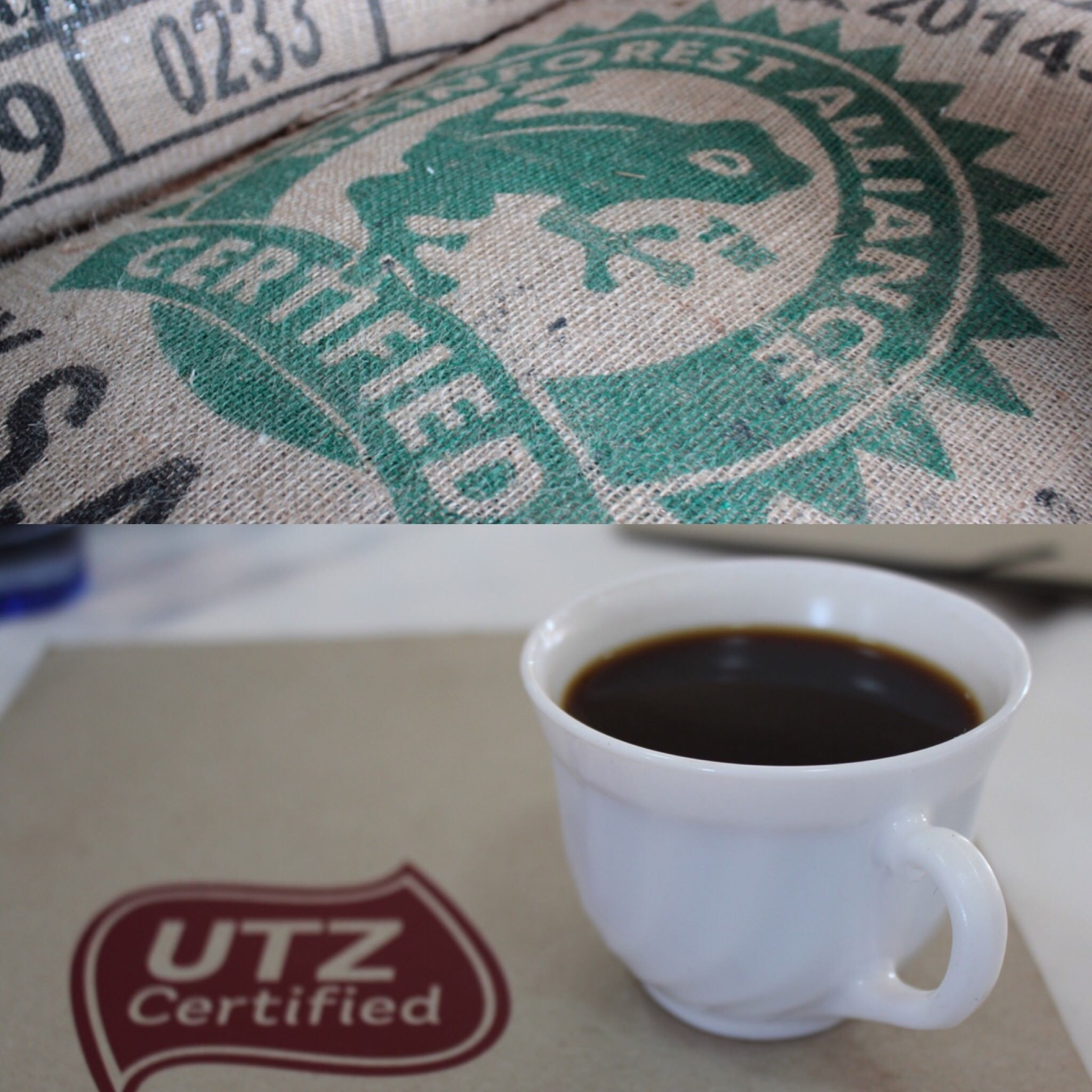 Joining forces with UTZ: An Update - Rainforest Alliance | For Business