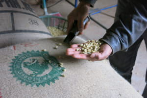 Farmer holding Rainforest Alliance Certified coffee beans