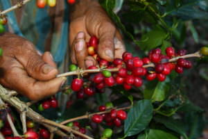 Rainforest Alliance Statement on Current Low Coffee Prices