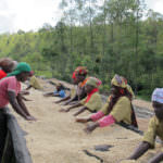 Stakeholders in Coffee Producing Countries Will Benefit From GCP and Rainforest Alliance's New Long-Term Agreement