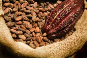 Die Rainforest Alliance qualifiziert Kakaobranche in Westafrika neu