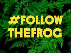 #FollowTheFrog-Kampagne 2019