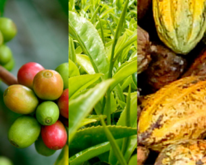 Rainforest Alliance Statistics Report 2018: Coffee, Tea, Cocoa
