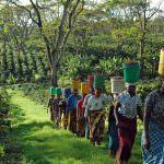 Norma de agricultura sostenible 2020