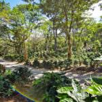 2020 Rainforest Alliance Certification Program