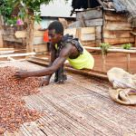 Rainforest Alliance Announces Strengthened Cocoa Certification Program