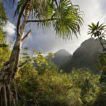 COVID-19: Pesan untuk Pemegang Sertifikat dan Lembaga Sertifikasi Rainforest Alliance dan UTZ