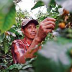 The Rainforest Alliance 2020 Certification Program Is Here