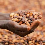 The Africa Cocoa Fund: Call for Applications and Q&A