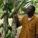 Die Einkommensschere für KakaofarmerInnen schließen: Das Modul des existenzsichernden Einkommens