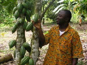 Farmer with a cocoa tree.