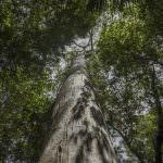 Start von Forest Allies, unserer Koalition für den Schutz und die Wiederaufforstung von Wäldern