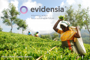 evidensia logo over a photograph of tea farmers