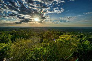 Forest Allies - Maya Biosphere Reserve forest landscape