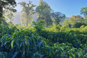 agricultura sustentável é uma solução climática natural