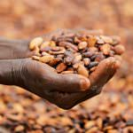 Moving the Strengthened Cocoa Assurance Plan to Phase 3