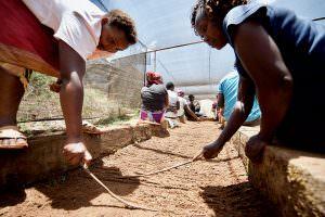 Kenya farm workers in a coffee nursery