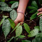 Warum Ihr Unternehmen sich für regenerative Landwirtschaft einsetzen sollte – und wie wir Ihnen dabei helfen können