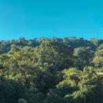 Cómo se convirtió O'Coffee en historia de éxito de la certificación Rainforest Alliance