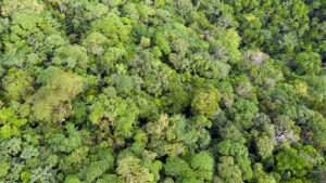 aerial view of tropical forest canopy
