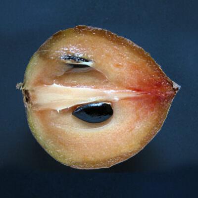 A half of a ripe Hasya sapodilla (Manilkara zapota / Sapotaceae).