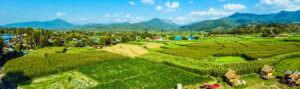 Asia rice field landscape - header