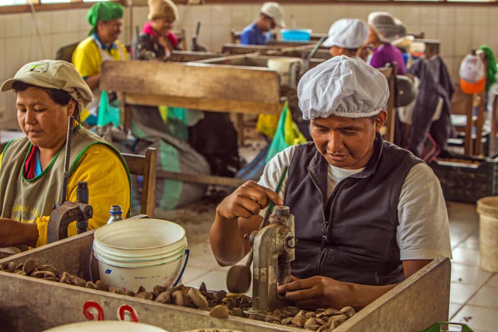 Brazil nut processing factory in Madre de Dios, Peru