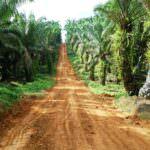 Un nuevo enfoque de sostenibilidad para palma: eliminación progresiva de la certificación de la palma en el programa de certificación 2020