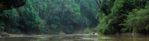 On the Amazon river - header