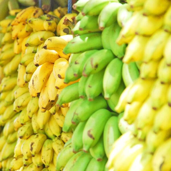 Bananas - header