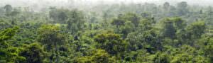 Cameroon rainforest - header