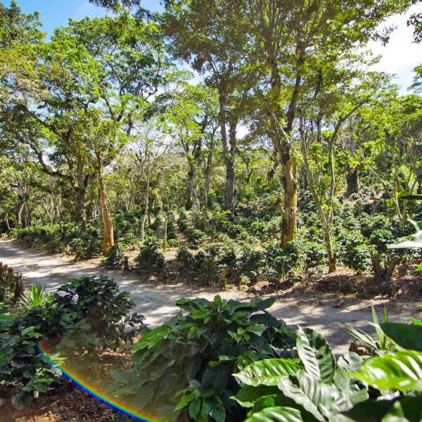 coffee-farm-nicaragua-header.jpg