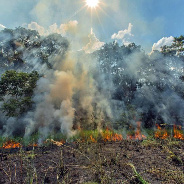 deforestation-header.jpg