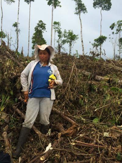 Deforested area in Ecuador