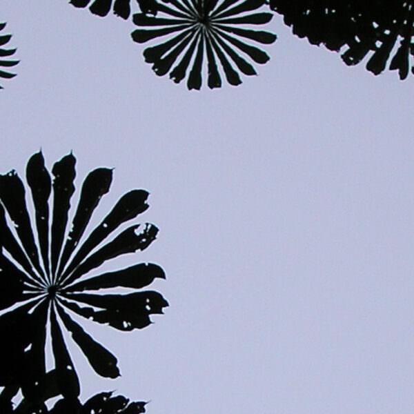 Tree canopy in DRC - header