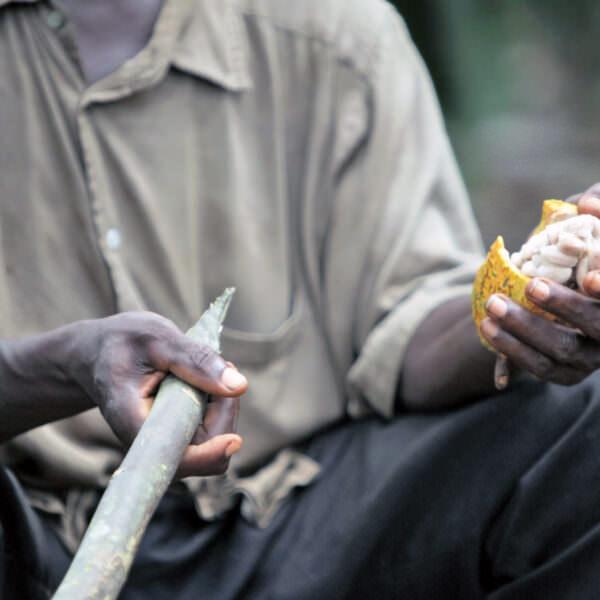 farmer holding opened cocoa pod
