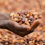 Le Fonds Africain pour le Cacao: Appel à Candidatures et Q&A