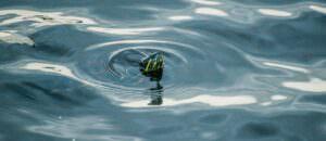 swimming turtle - header