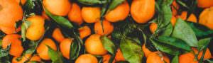 oranges - header