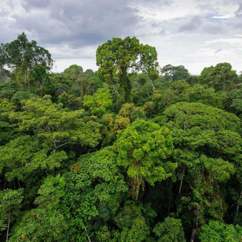 Peruvian Amazon rainforest in Tambopata reserve