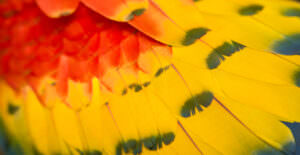 scarlet macaw feathers - full