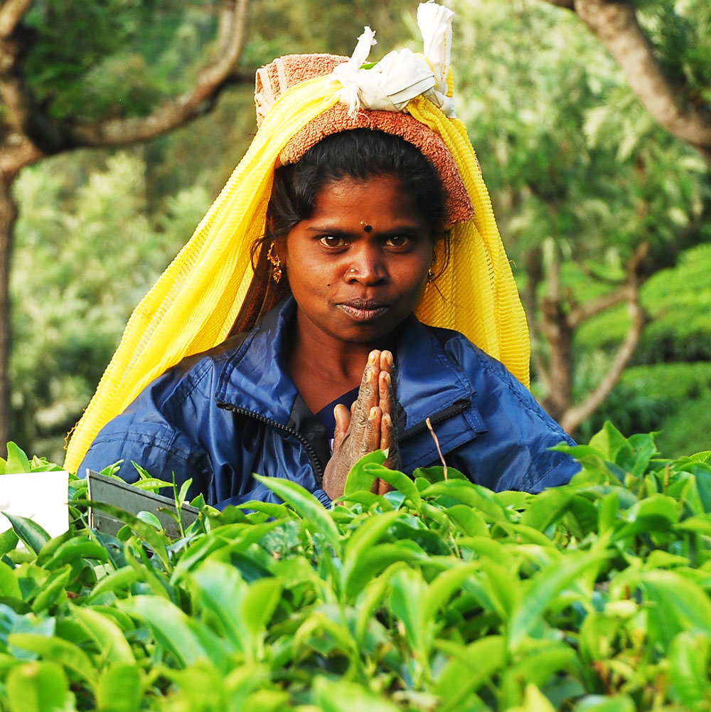 Tea plucker in India greets with namaste