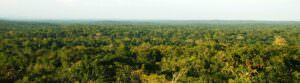 tikal-forest-header.jpg
