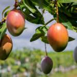 Agrodan: os benefícios para o negócio do pilar social da sustentabilidade